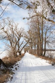 Серия голых деревьев, на которых зимой выращивают омелу.