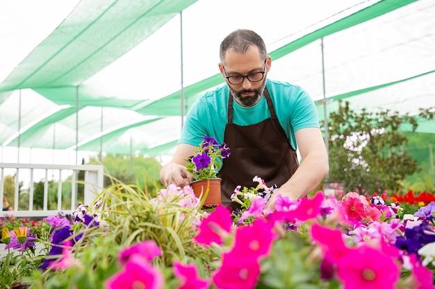 市場に向けて花の植物を準備している深刻なひげを生やした庭師