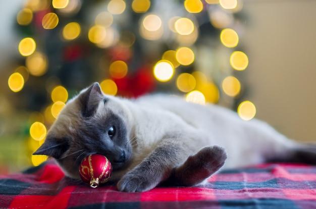 Серьезный кот на фоне размытых рождественских огней елки