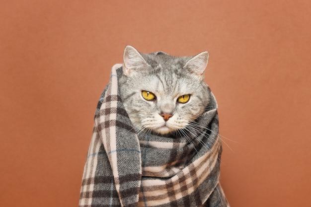 Серьезный кот, завернутый в клетчатый плед на коричневом фоне