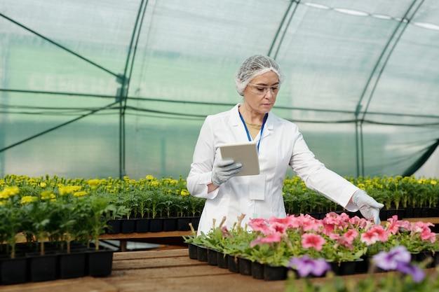 Серьезный эксперт-женщина с таблеткой, глядя на рассаду петунии