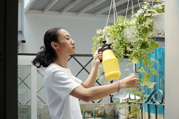 Serious handsome young man spraying ivy plants in hanging pots with water