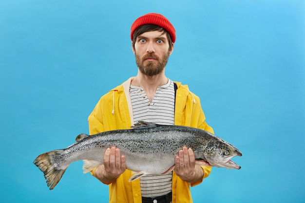 Serious surprised fisherman with blue eyes and beard wearing red hat and yellow jacket holding huge fish in hands demonstrating his catch isolated on blue wall. fishing concept