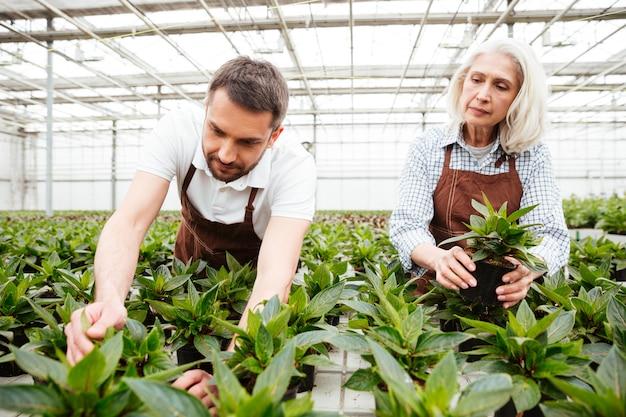Lavoratori seri in giardino che guardano e toccano le piante