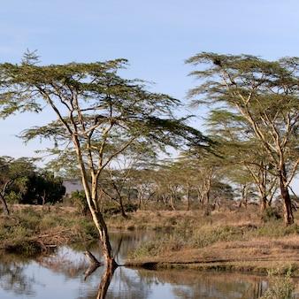 セロネラ川、セレンゲティ国立公園、タンザニア、アフリカ