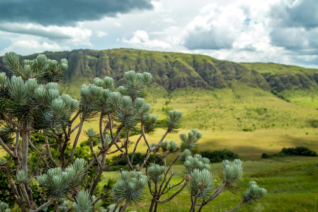 Национальный парк serra canastra бразилия