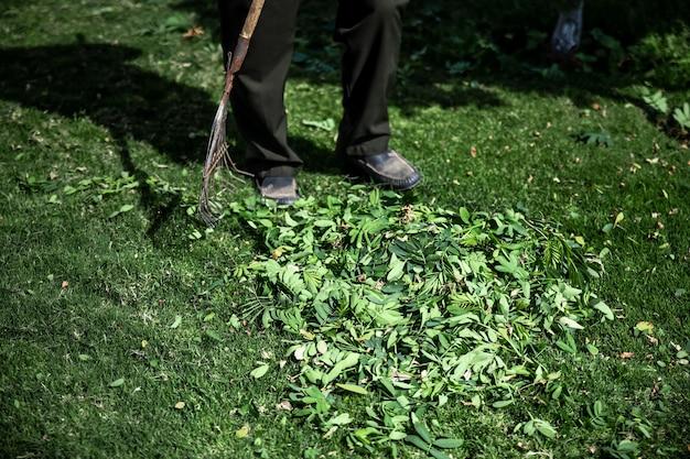 庭の掃除のための鋸歯状の金属熊手
