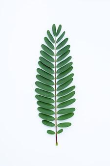 Листья sesbania grandiflora на белой поверхности