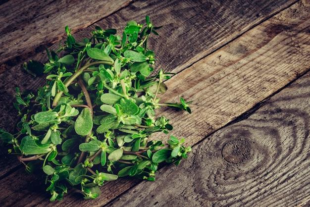 Sesuvium portulacastrum (해안 쇠비름, 바다 쇠비름) ; 해안 지역에서 자랍니다. 녹색 잎은 두껍고 매끄럽고 다육질이며 광택이 있으며 선형 또는 피침형입니다.