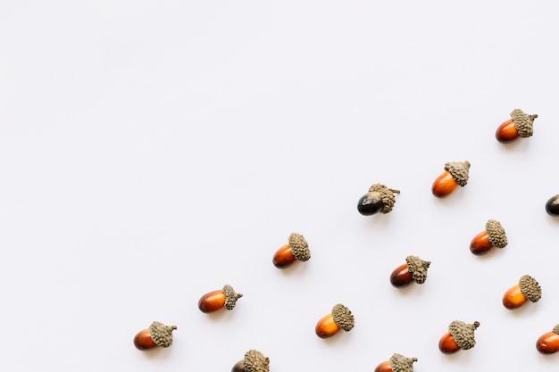 Set of acorns on white surface
