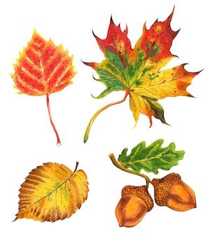 Set of autumn leaves leaves of oak elm maple birch and acorns autumn illustration handdrawn