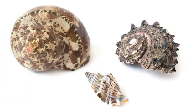 Set of beautiful seashells on white
