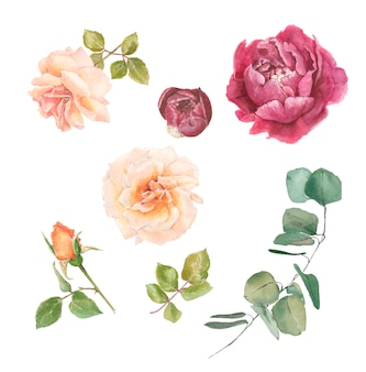 Set of branches of delicate roses for decoration peony eucalyptus