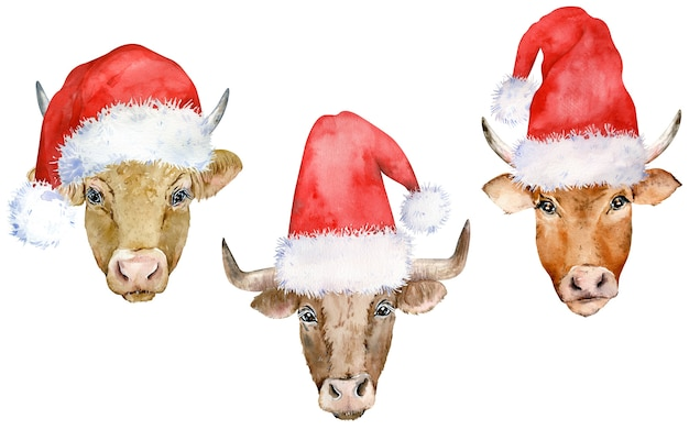 Set of brown cows in christmas santa's hats