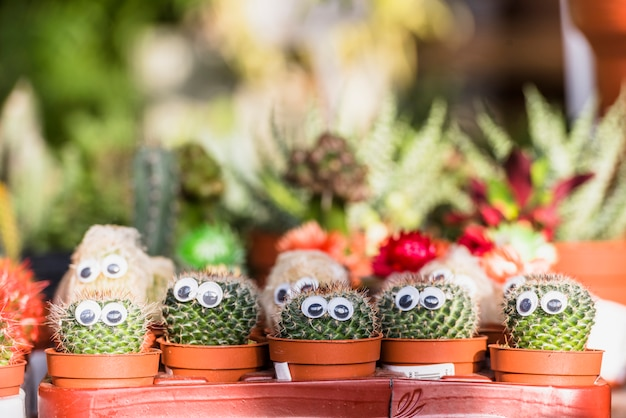 Set of cactuses with decorative eyes in pots