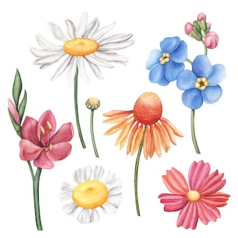 Set of colorful hand-drawn watercolor wild flowers