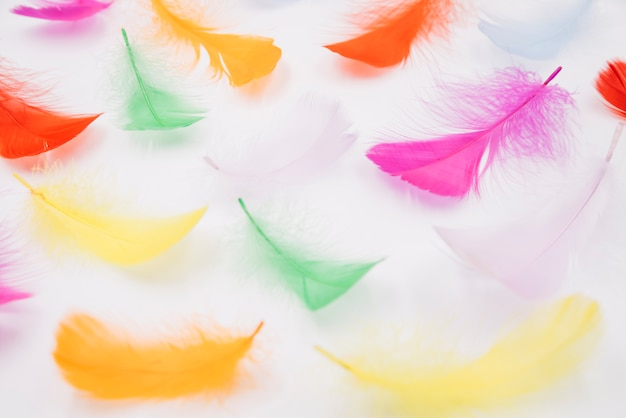 Set of colourful feathers