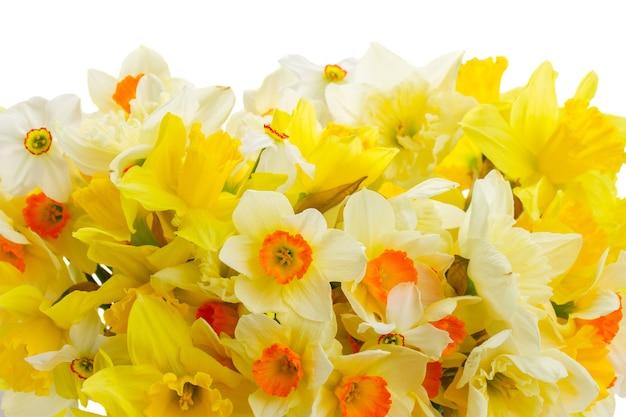 Set of colourful freshly cut flowers Premium Photo