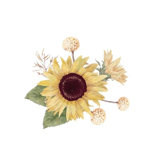 Set of cute sunflowers flowers branches and leaves. watercolor illustration.