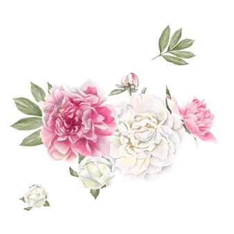 Set of delicate red and white peonies watercolor illustration