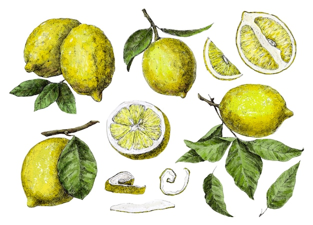 Set of hand drawing lemons. hand drawing in ink.