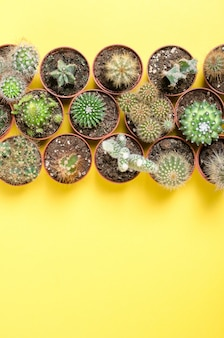 Set of little cacti. top view.