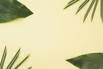 Set of assorted palm leaves