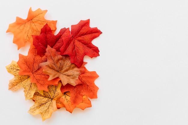 Набор осенних кленовых листьев