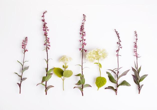 白で隔離の美しい野生の蘭の花、アジサイのセットです。 epipactis atrorubens、dark-red helleborine、royalhelleborine。植物学の概念、俯瞰上面図、フラットレイ。北ヨーロッパ、ラトビア