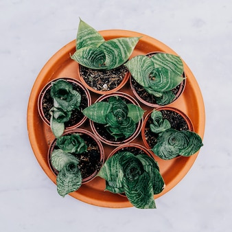 대리석 테이블에 냄비에 선인장 세트. 평평한 평지 최소한의 식물 예술