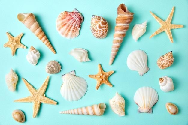 Набор экзотических ракушек и морских звезд на синем фоне