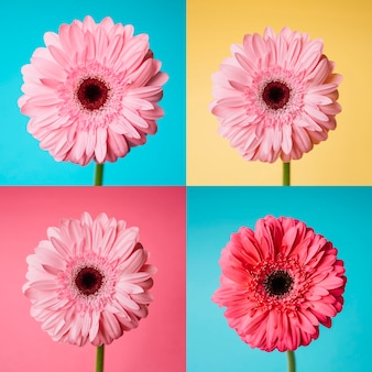 Set of flower pictures