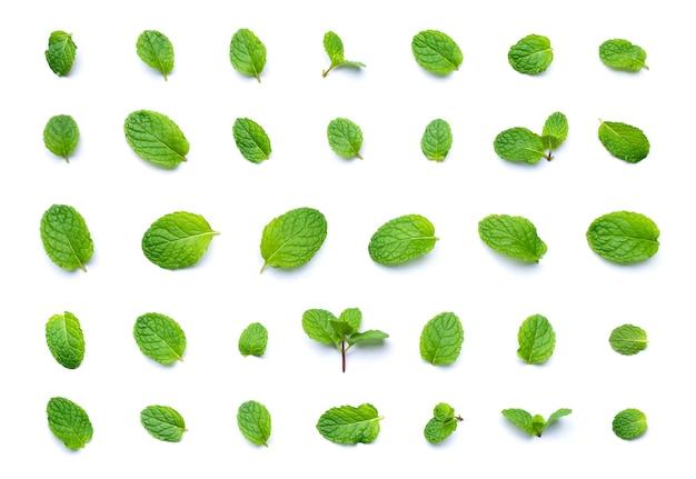 白い背景で隔離の新鮮なミントの葉の上面図のセットです。