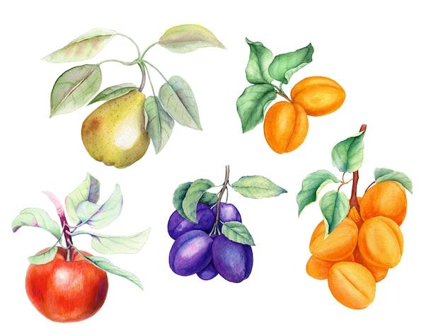 Набор фруктовых веток с зелеными листьями, изолированные акварельные иллюстрации, подходящие для дизайна продуктов питания