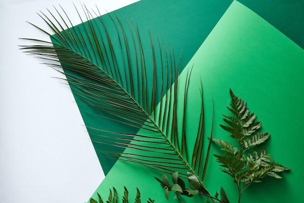 Набор зеленых пальмовых листьев, папоротника и веток