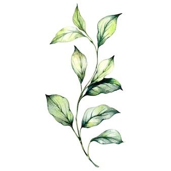 Набор зеленых акварельных листьев и травы.