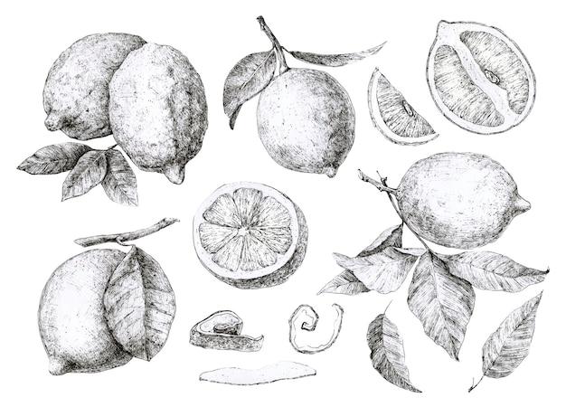 Набор ручной рисунок лимоны
