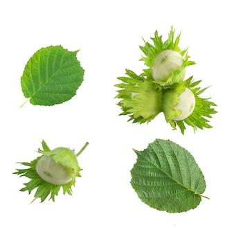 흰색 배경에 분리된 헤이즐넛과 잎 세트