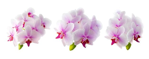 흰색 바탕에 분홍색 난초 꽃 세트입니다. 고립 된 개체