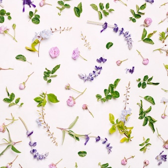 Set of purple flowers and green leaves