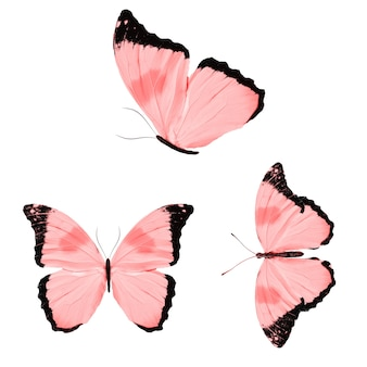 흰색 배경에 고립 된 빨간 나비의 집합입니다. 고품질 사진