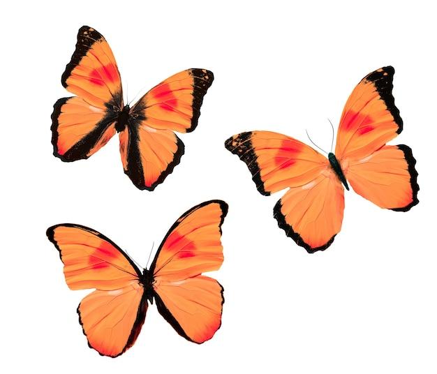 Набор красных тропических бабочек, изолированных на белом фоне. фото высокого качества
