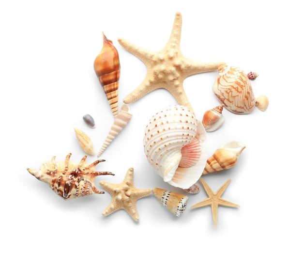 白の貝殻とヒトデのセット