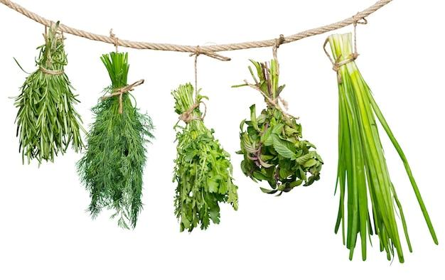 Набор пряных трав, изолированные на белом фоне, пучки тимьяна, базилика, орегано, петрушки,