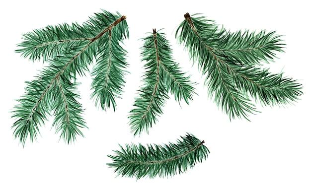 針葉樹の小枝のクリスマスと新年のイラストのトウヒの松のモミの枝のセット