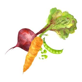 3つのカラフルな庭の野菜のセット白い背景に手描きの水彩イラスト