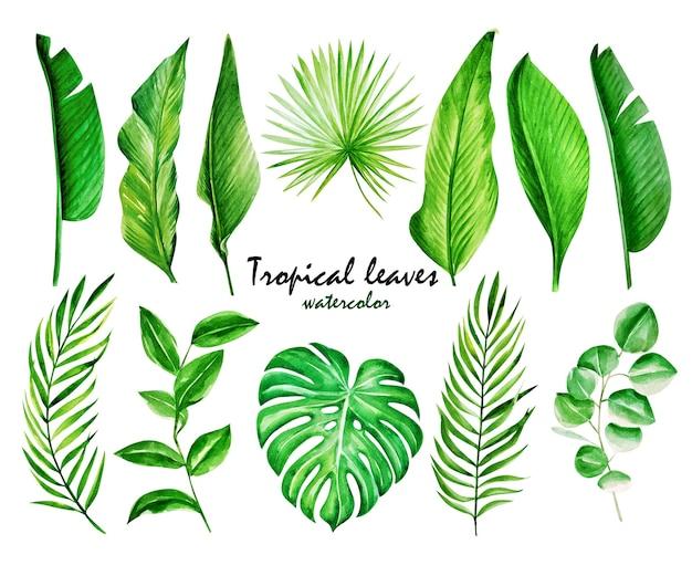 Набор тропических листьев.