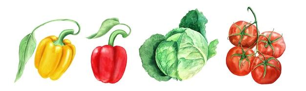 分離された野菜のセット