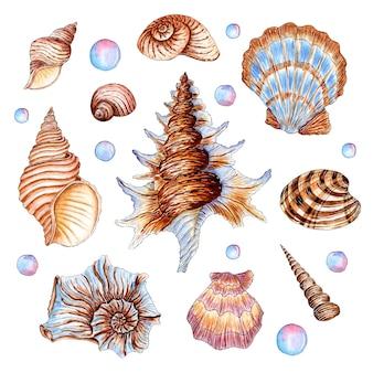 베이지색과 파란색의 아름다운 조개의 수채화 삽화 세트 수중 세계