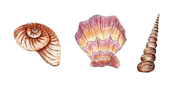 베이지색 색상의 아름다운 조개의 수채화 삽화 세트 수중 세계